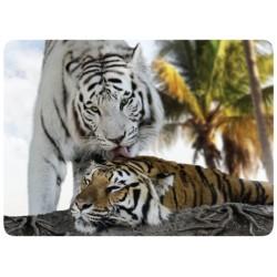 Tigre Blanc Câlin
