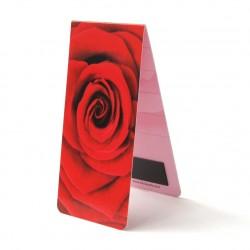 Rose Zoom