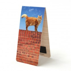 Chat sur Mur