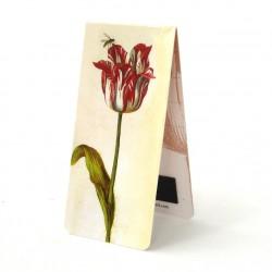 Tulipe Rouge J.Marrel