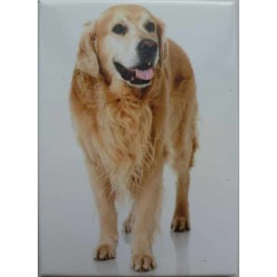 Magnet Golden Retriever