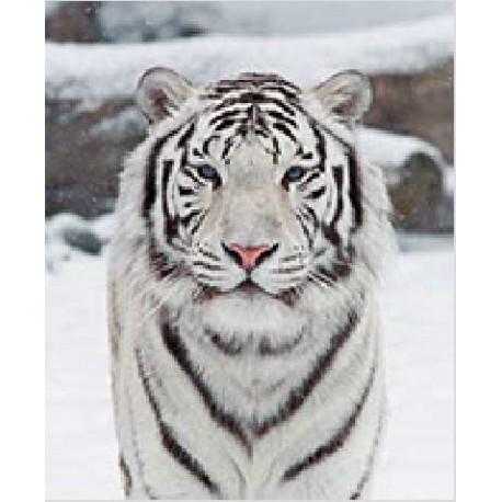 Tapis De Souris Tigre Blanc Marcoeagle