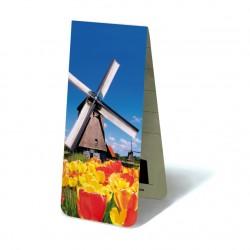 Moulin Tulipes