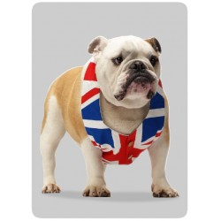 Bulldog GB