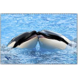 Orques Bisou