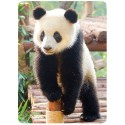 Sticker Cleaner Panda