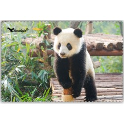 Chif' Fou' Net Petit Panda