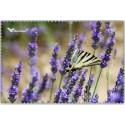 Chif' Fou' Net Papillon Lavande