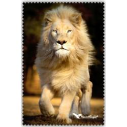 Chif' Fou' Net Lion Blanc