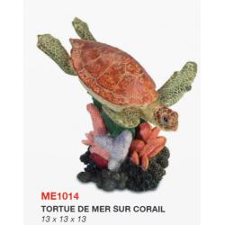 Tortue de Mer sur Corail