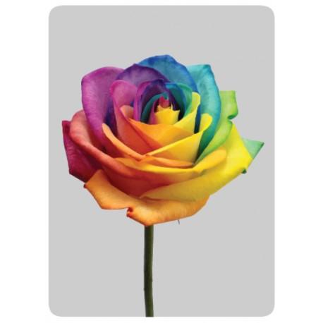 Rose couleurs
