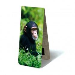 Chimpanzé BB