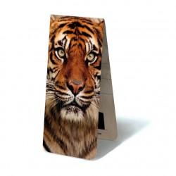 Tigre Face
