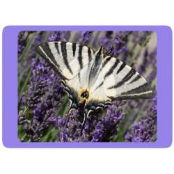 Papillon Lavande