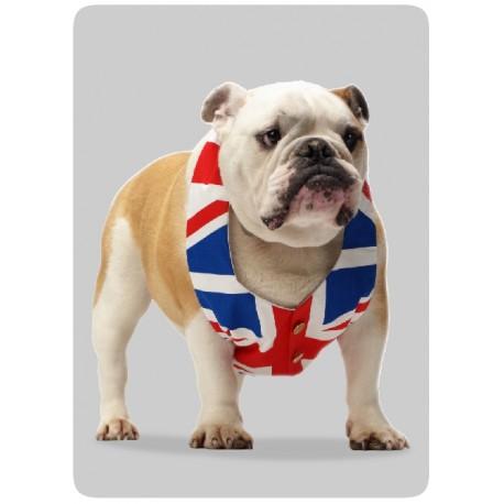 Bulldog GB