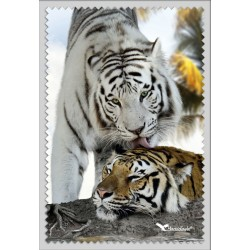 Tigre Blanc Calin