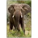 Chif' Fou' Net Eléphant Afrique